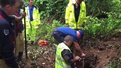 Rescue Mission For A Dog Stuck In Wombat