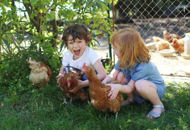 Kids love the company of chickens, and it helps teach them where food really comes