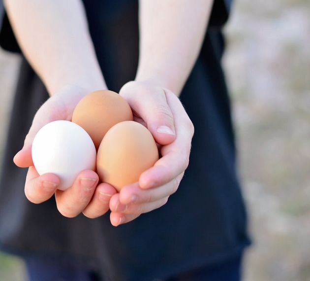 Backyard eggs come in different colours and sizes, with the yolks much brighter and richer in