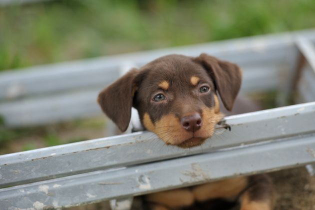 Melbourne And Gold Coast Most Pet-Friendly Cities But Australia Lags Behind The Rest Of The