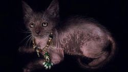 Werewolf Kittens Are Real... And You Already Want
