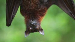 Meet The Woman Behind The Incredibly Popular Batzilla The Bat