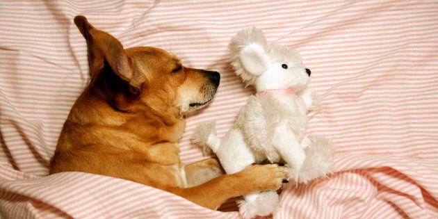 Sweet dreams, little