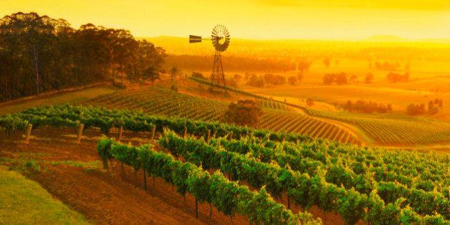 Windmill in vineyards, Hunter Valley wine region, New South Wales,