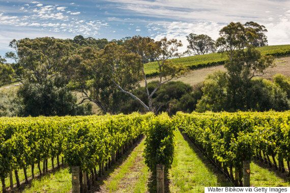 A Guide To Australia's Wine Regions, From Wine