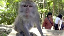 Aussie Diagnosed With Zika After Bali Monkey Bite, Experts Warn Of Missed