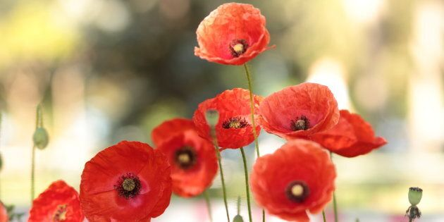 Why do we need to cut those tall poppies