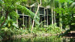 Australia's Best Jungle