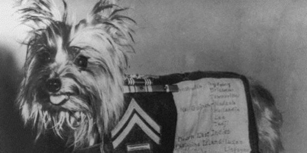 Tiny War Hero Lead Vital WWII Missions And Is Now Posthumously Honoured With RSPCA's Highest