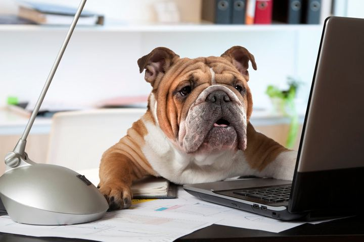 Depending on the abilities of your pet, you can even get them to help you with data entry.