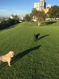 Kipper and Blossom enjoying some leash-free time in North