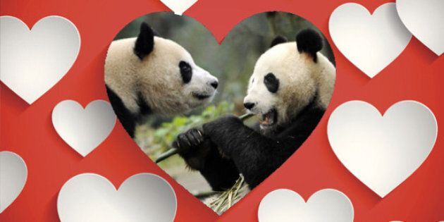 Pregnant Paws: Giant Pandas Wang Wang And Fu Ni Waiting On