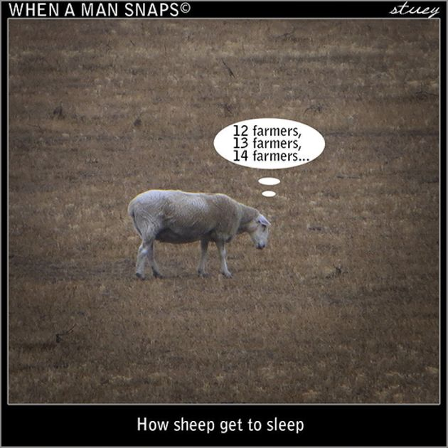 Ever Wondered How Sheep Get To