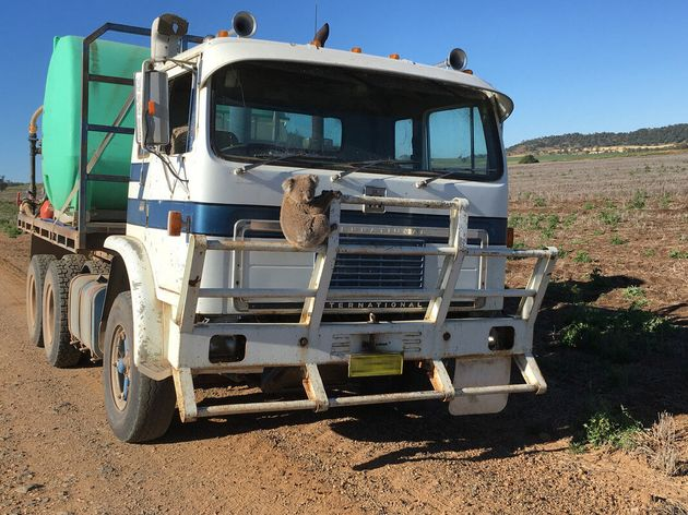 This furry little guy was returned to the bush, and the truck driver even reversed the whole way so the...