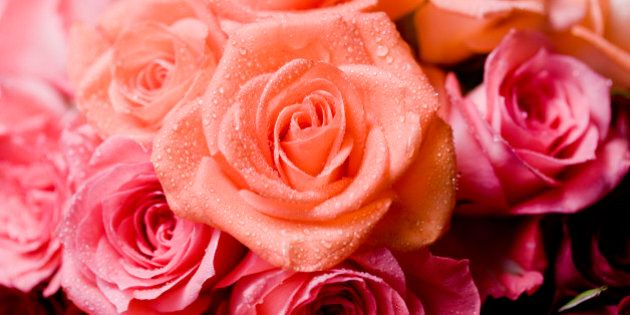 Wet roses with