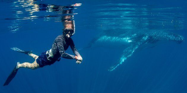You can swim with whales in WA for the next four months as part of a government