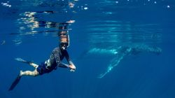 People Are Diving With Humpbacks, And The Pictures Are