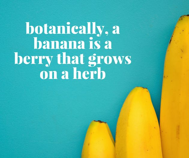15 Surprising Facts (And Tips) About Fruit And