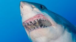 Man Attacked By Shark In