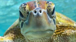 Why You Should Care About World Turtle