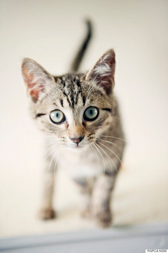 You Could Adopt This Little Guy For $29 As RSPCA Clears Shelters In