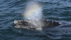 Whales Blowing Out Rainbows Isn't As Magical As You