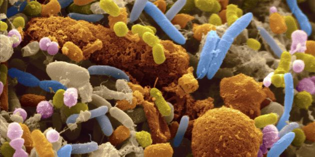 Gut diversity has been shown to be important for maintaining a healthy