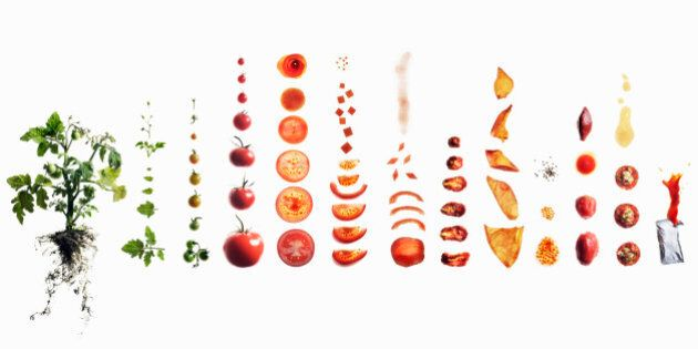 Tomato dissection: from plant to