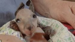 Little Joey In Kangaroo Dundee Captures Hearts Around The