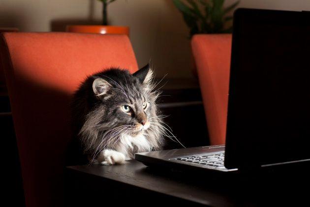 Sooo... wanna cat-ch up