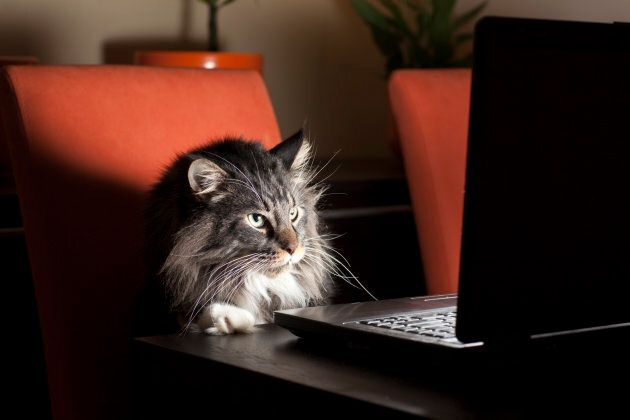 Sooo... wanna cat-ch up later?