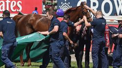 Red Cadeaux Put Down After Melbourne Cup
