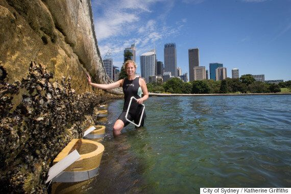 Sydney's Underwater City Gets New Units For Starfish, Crabs And