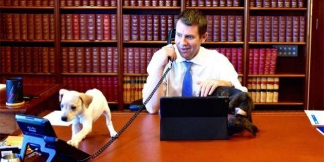 Premier's Puppy Love As Mike Baird Gets A Little Bit Cute With Adoption