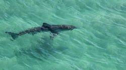 Drones At The Beach: They're Filming Sharks, Not