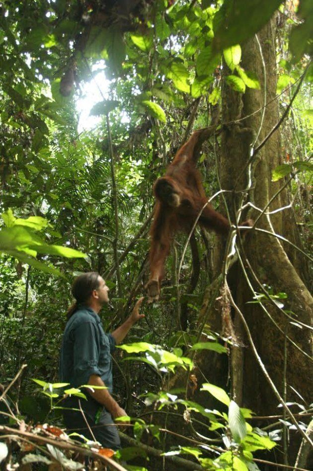 The Orangutan Project works to fight deforestation everyday.