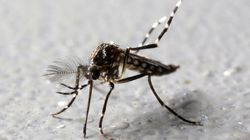 CDC Reports First Official Zika Numbers From Puerto