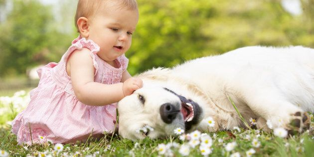 Baby Girl In Summer Dress Sitting In Field Petting Family