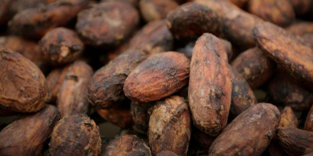 Rich cacao beans dry and ferment in preparation to make