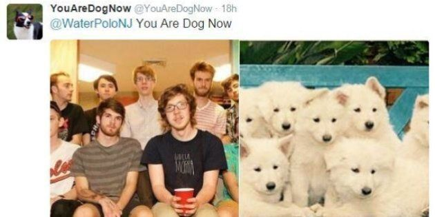 'You Are Dog Now' Is Twitter Done