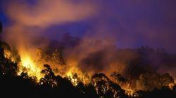 Bushfire Season 'Going To Get Very