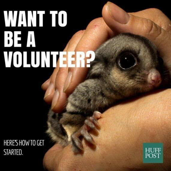 Volunteering In Australia: What You Need To