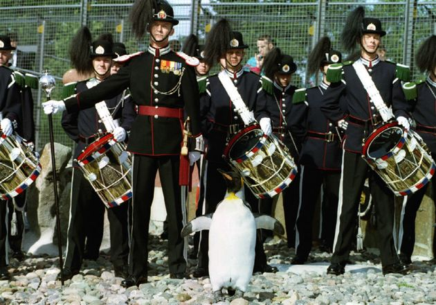 Regimental Sergeant Major Nils Olav, standing to attention before the Norwegian King's Guard, led by...