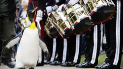 This King Penguin Just Got Promoted By The Royal Norwegian