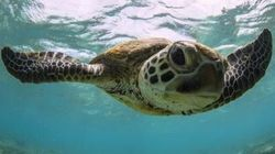 Turtle Egg Laying Season At Mon Repos Beach Is On The Australian Travel Bucket