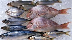 Japanese Seafood Is Mostly Free From Fukushima