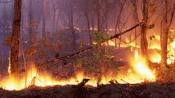 These Images Show The Devastating Early Start To Australia's Bushfire