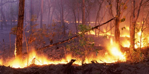 Forest Fire, kakadu National Park, Northern Territory,