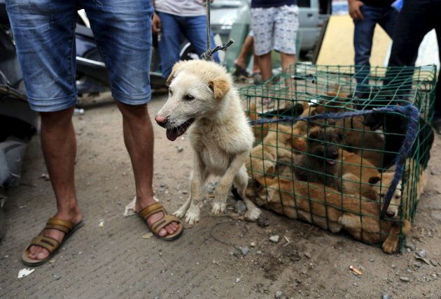 It's estimated around 10,000 dogs are killed and eaten during the Yulin festival each