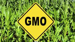 Genetically Modified Food: What You Need To